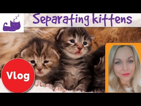 Separating kittens from a cat mother 😿 how to deal with cat separation anxiety