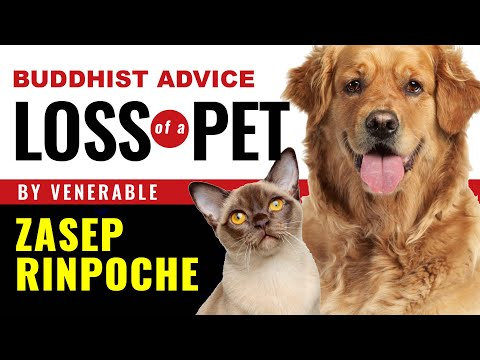 Buddhist Advice: dealing with loss of a pet