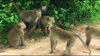 Download Have a look Two Monkey Fighting to Control this group but can not win. -  Angkor Daily 412