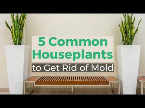Common Houseplants to Get Rid of Mold