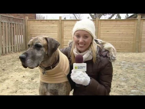 WATCH: Instantly avoid spring dog poop clean-up