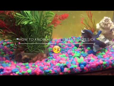 🐟How to know if your betta fish is sick🐠||🤕||