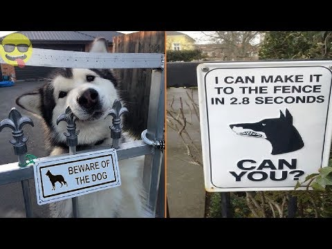 Beware Of Dog Signs That Will Make You Laugh