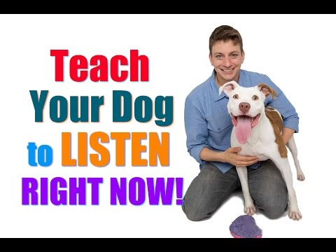 How to Get Your UNFOCUSED Dog to LISTEN to You RIGHT NOW!  (