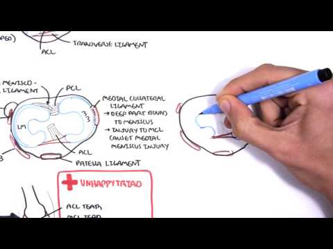 Clinical Anatomy - Knee mensicus