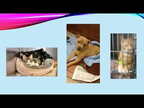 Veterinary Nurse role
