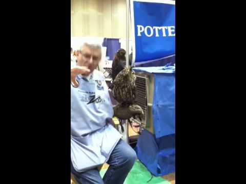 Owl at Michigan Vet Conference