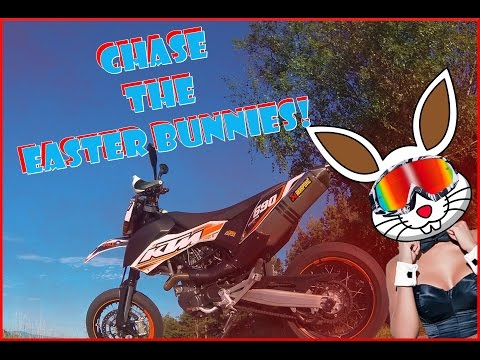 Supermoto chases the easter bunnies. | Be fast enough!