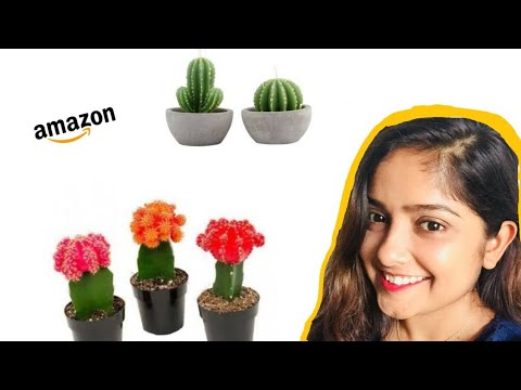 I bought live plants from Amazon !!
