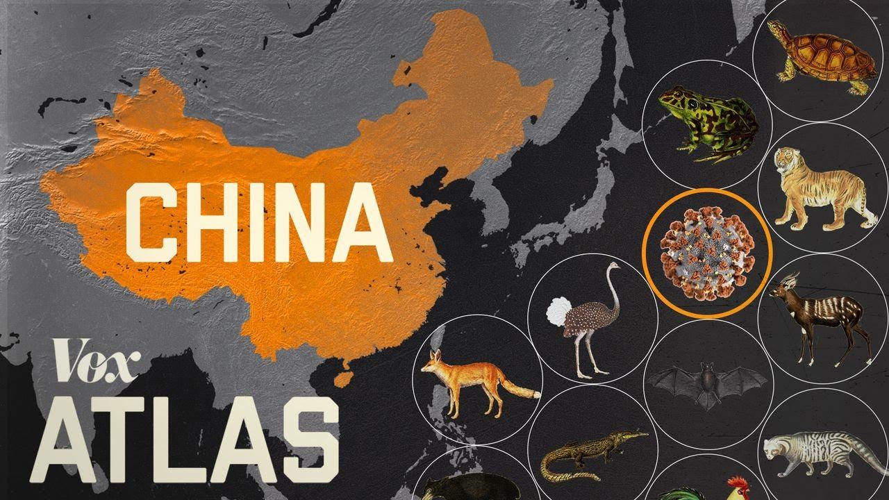 How wildlife trade is linked to coronavirus