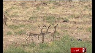 Iran Shir-Ahmad natural protected area, Sabzevar county منطقه حفاظت شده شيراحمد سبزوار ايران