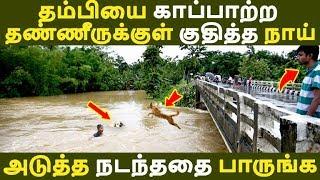 தம்பியை காப்பாற்ற தண்ணீருக்குள் குதித்த நாய் அடுத்த நடந்ததை பாருங்க Tamil News | Latest News | Viral