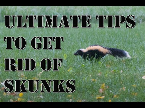 Learn How to Get Rid of Skunks Fast | BEST Repellent for Getting Rid of Skunks | How to Repel Pests