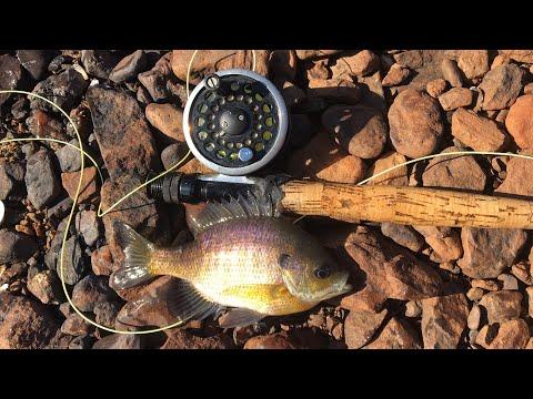 Winter Fly Fishing For BIG Bluegill
