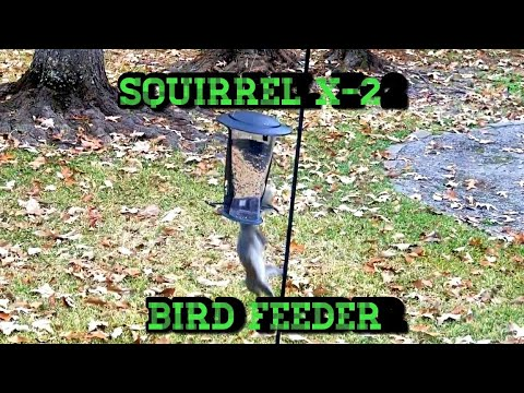 How To Keep Evil Squirrels From Eating All Your Bird Seed.