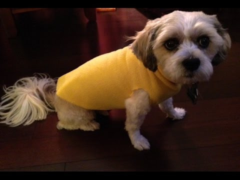 DIY No Sew Dog Sweater