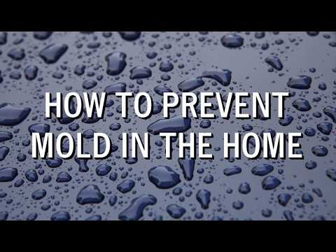 How to Prevent Mold in The Home