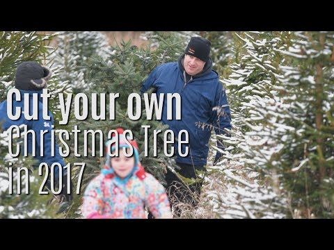The you-cut Christmas tree experience