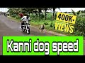 Kanni Chippiparai Dog Race In India  Indian Hound  Hunting Dogs