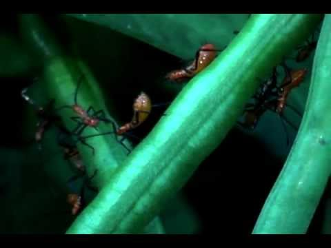 Bug Cam  Day & Night close up with ants,bees,spiders, reptiles, toad & more little bug