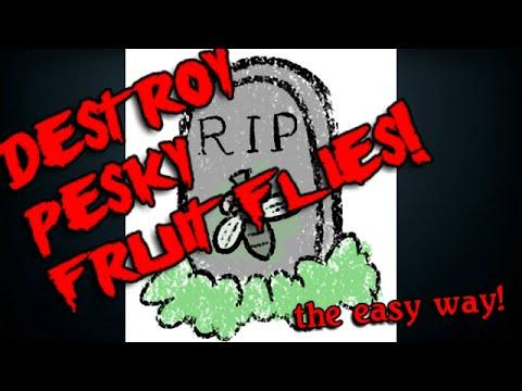 Kill Fruit Flies in Your Kitchen