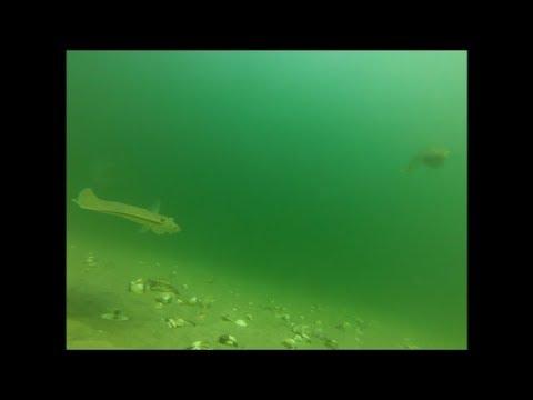 Fishing for Flounder - Watch Them Strike Baits!