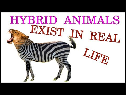 Hybrid Animals Exist in Real Life
