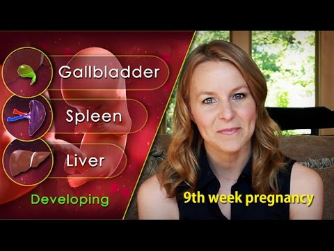 9 Weeks Pregnant: Understand Surprising Growth of Your Fetus!