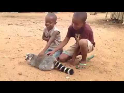 That raccoon is really itchy