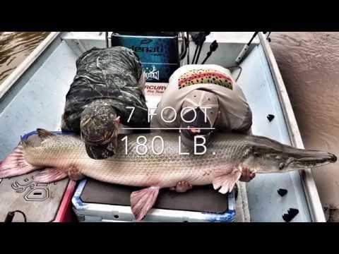 Fishing For Huge Texas Monster Alligator Gar