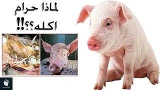 هل تعلم لماذا خلق الله تعالى الخنزير ؟؟ وما الحكمة من تحريم اكله ؟؟