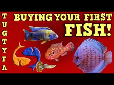 Buying Your First Fish / The Ultimate Guide To Your First Aquarium Part 6