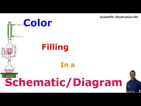 Color Filling in a Schematic/ Diagram with Photoshop | Scientific Illustration. Lesson-04