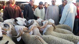اليوم في سوق الفقيه بن صالح المليح موجود و الثمن مناسب و الكسابة حتى هما ساخطين على المنتخب الوطني