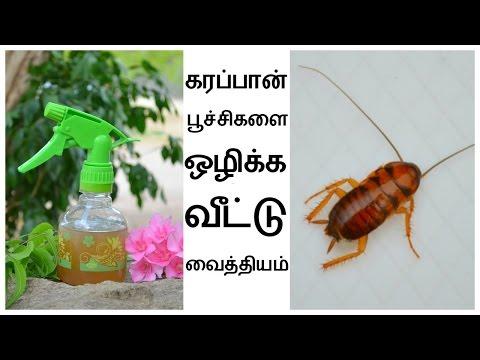 கரப்பான் பூச்சிகளை ஒழிக்க 2 அற்புதமான வீட்டுவைத்தியங்கள் | Get Rid Of Cockroach in Tamil