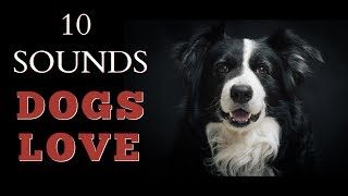 10 Sounds Dogs Love To Hear The Most