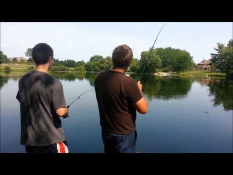 Bluegill Fishing in Small Pond Live Action