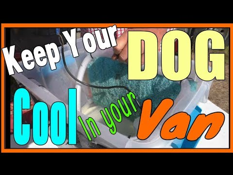*How to KEEP DOGS COOL Living in a Van*