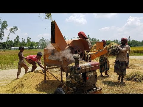 Amazing Paddy Thresher Machine in Village || Rice Harvester