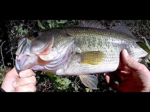 Fall Bass Fishing with Spinnerbaits - Long Island, NY