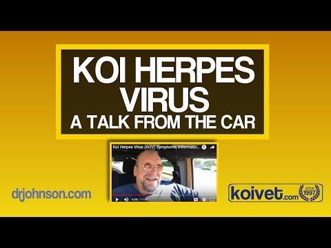 Koi Herpes Virus (KHV) Symptoms, Information and Control