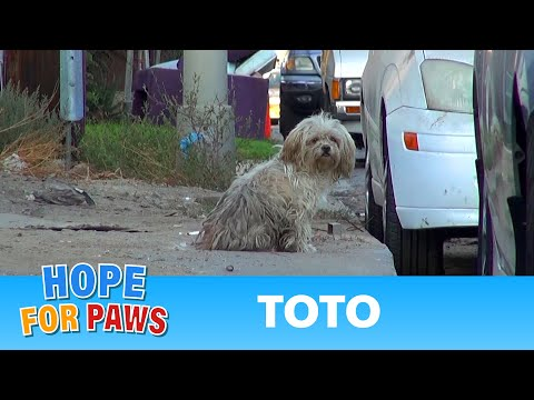Scared homeless dog tried to bite his rescuers.  See what happens next and please share.