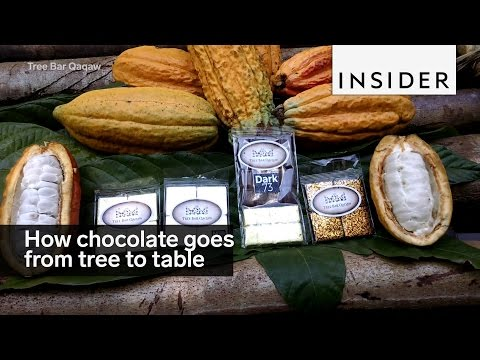 This is how chocolate goes from tree to table