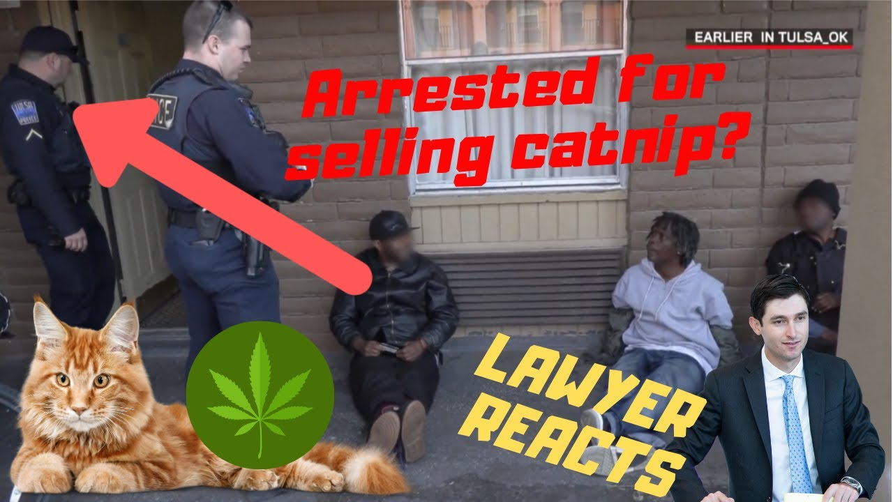 "Is trying to pass Catnip as dope illegal? | Lawyer reacts to ""Live PD: Smoking Catnip"""