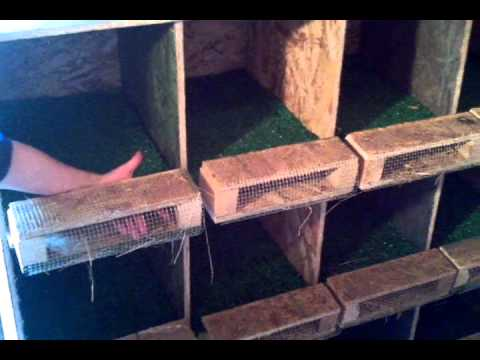 Roll out nest boxes.  For Egg Eaters & Cleaner Eggs.