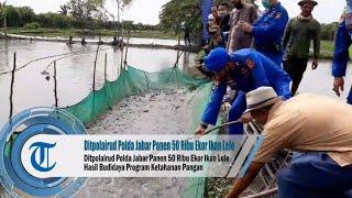 Ditpolairud Polda Jabar Panen 50 Ribu Ekor Ikan Lele Hasil Budidaya Program Ketahanan Pangan