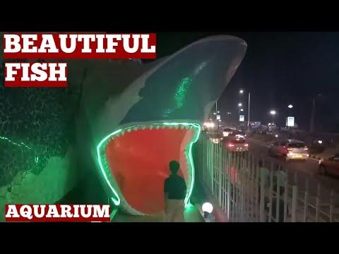 Fish Aquarium For Kids-Fish Aquarium For Children-Fish Aquarium India RK Beach Vizag