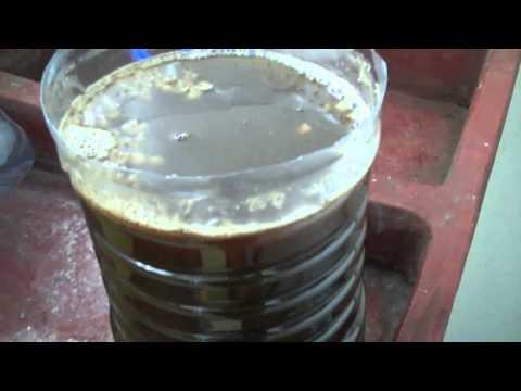 Water kefir / Tibicos