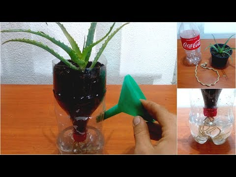 How to make Self watering system for plants using plastic bottle