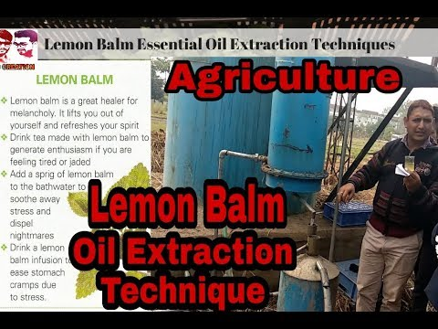 Lemon Balm Oil Extraction Technique| At Centre for Aromatic plant(medicinal)SIIDCUL |BSc Agriculture